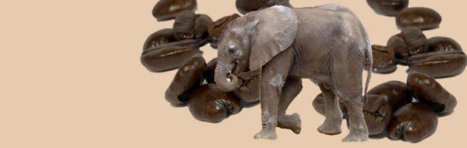 Elefanten produzieren Luxus-Kaffee